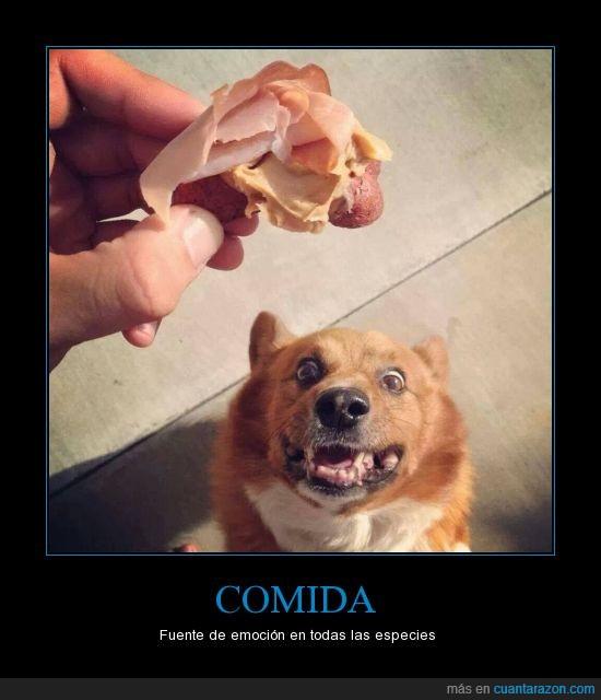 comida,dueño,felicidad extrema,Perro