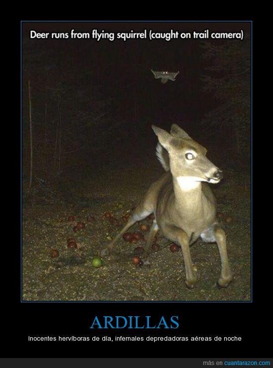 ardilla,ciervo,depredador,huír,nocturno.,Venado,volar