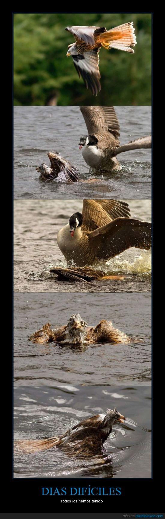 agua,aguila,atacar,lago,pato,pelea,perder,tontisima...