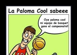 Enlace a PALOMA COOL