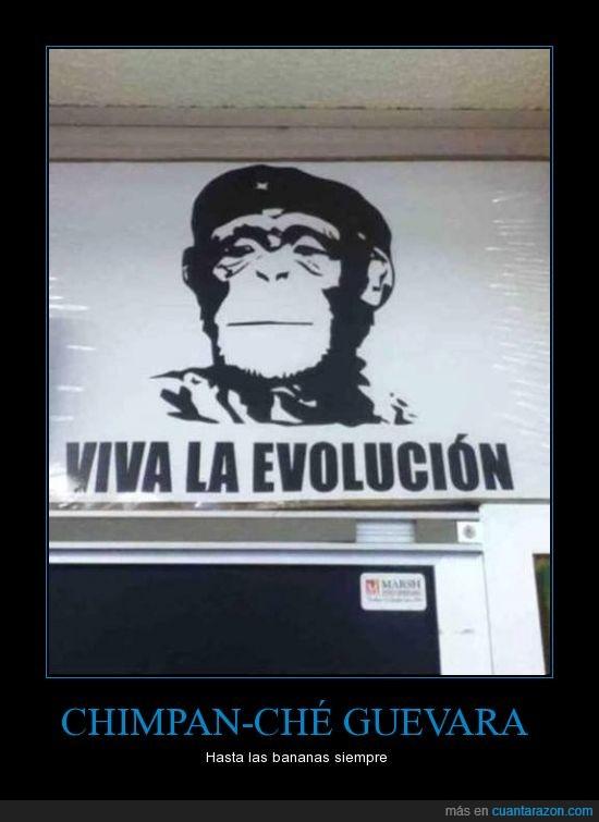 che guevara,chimpancé,chistaco,jaja,monos,pero que es un chimpancé