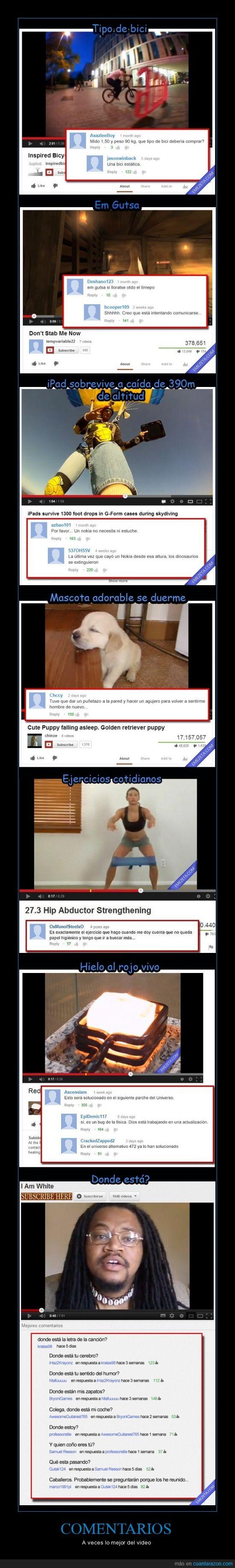 bici estatica,bug,comentarios,gordo,graciosos,perro,rojo,videos,youtube