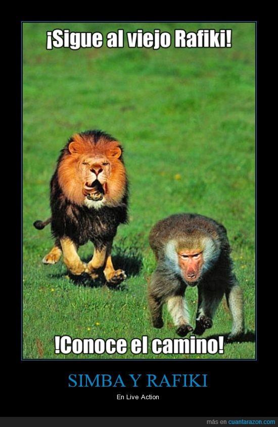 el rey leon,live action,mufasa,rafiki,sigueme,simba,todos sabemos que se lo va a comer