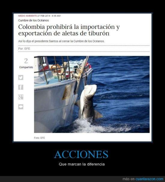 aletas,cumbre,exportación,importación,océanos,prohibir,tiburón