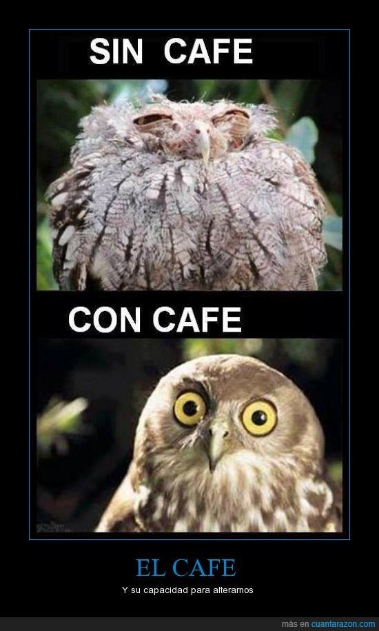 alterar,búho,café,despertar,relaxing cup o no tan relaxing,sueño