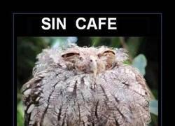 Enlace a EL CAFE