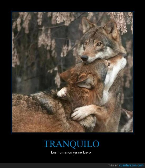 abrazar,humanos,lobos,miedo,persona,salvajes