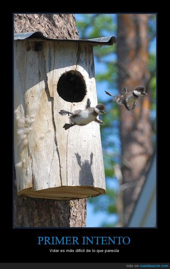 aves,intento,nido,patos,primer,primera,salir,vez,vuelo
