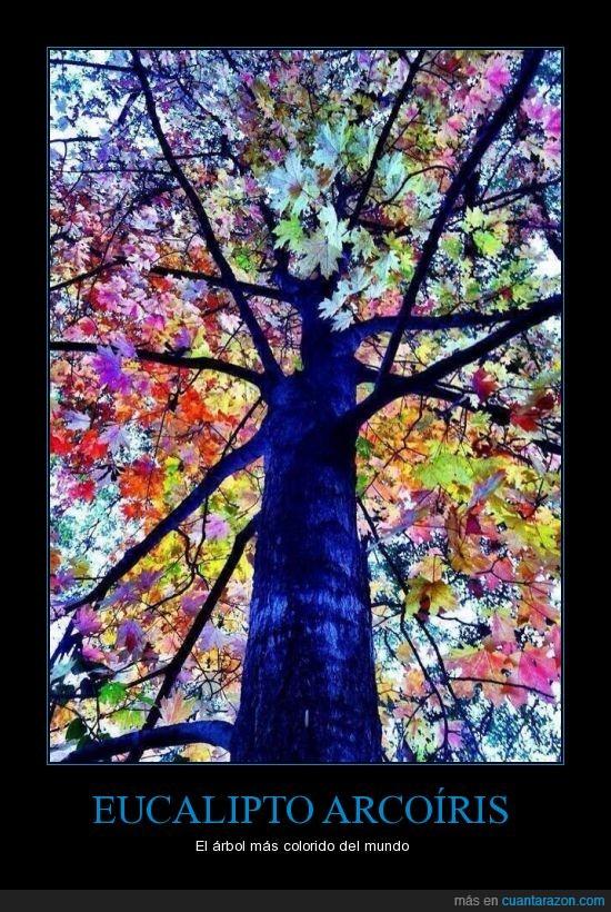 árbol,arcoíris,bonito,colores,naturaleza