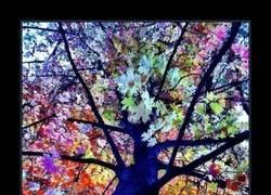 Enlace a El árbol más colorido del mundo