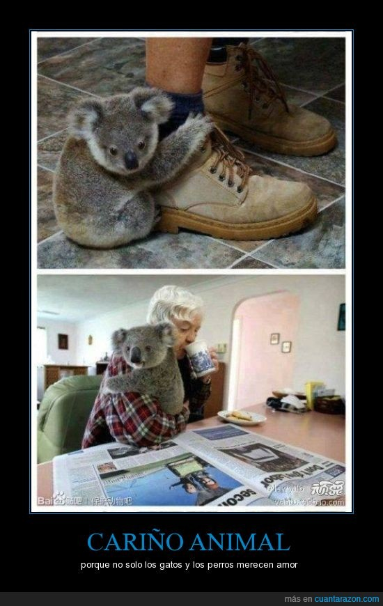 amor,animal,dueña,koala,perros