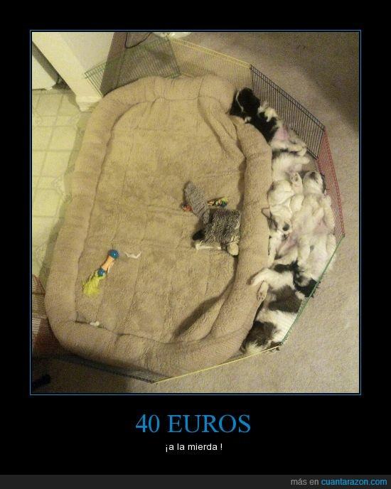 cachorros,cama,canes,perros