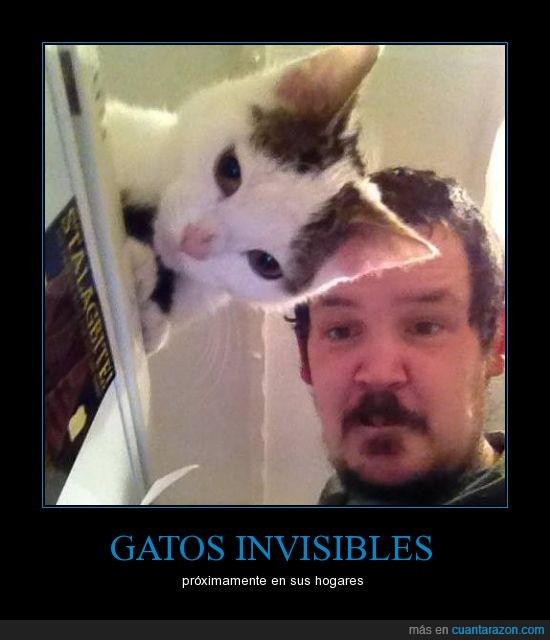 cuantodaño,efecto optico,gatos,invisibles