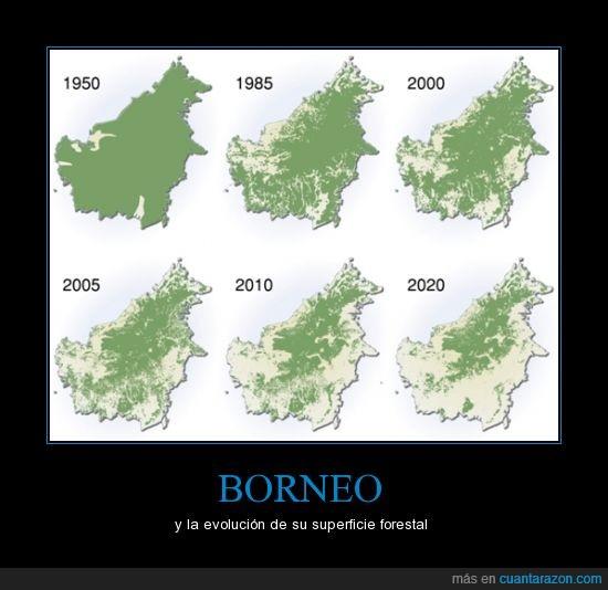 Borneo,cada vez menos,deforestación,desastre ecológico,peligro para el orangután