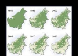 Enlace a La deforestación de Borneo