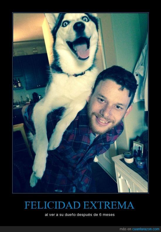 6meses,amo,dueño,felicidad,perro