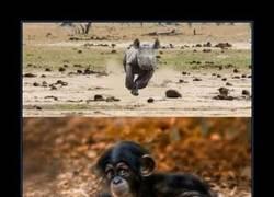 Enlace a Qué monos son los cachorros