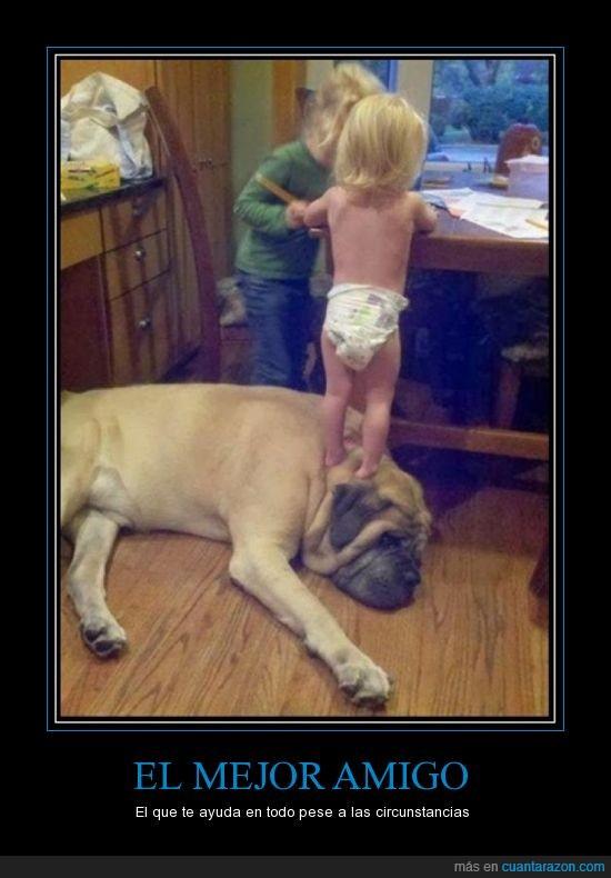 amigos,mejor amigo,mejores amigos,mi perro,perros,perrunos