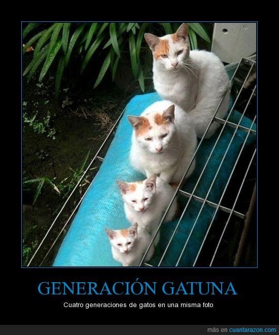 cachorro,familia,gato,hijo,padre,pequeño
