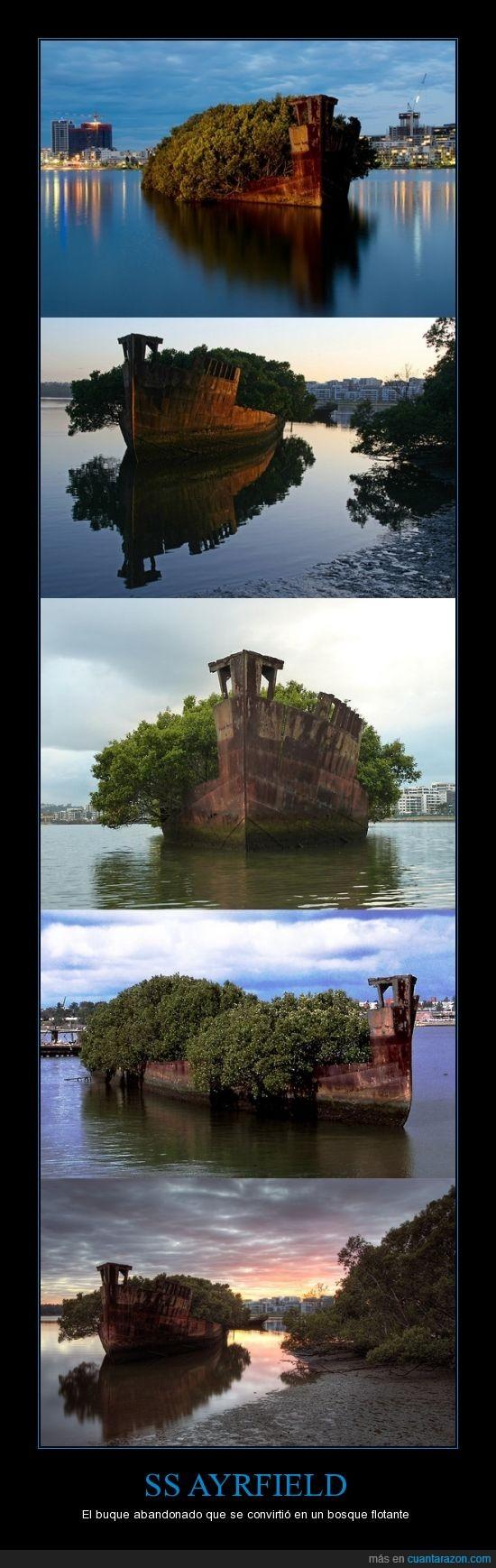 barco,bosque flotante,Homebush Bay,SS Ayrfield,Sydney