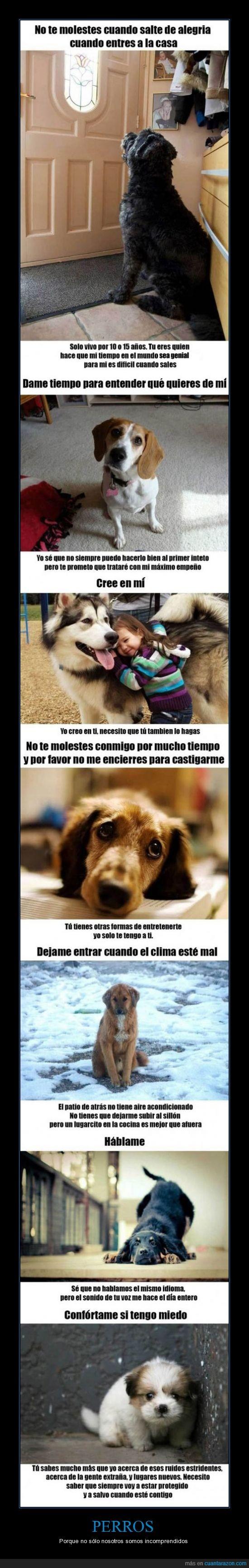 castigar,incomprendidos,miedo,perros,triste