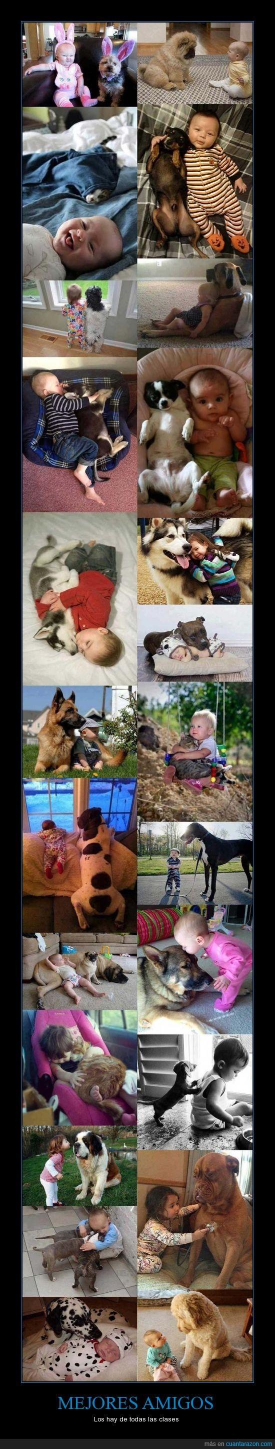 alguien mas quiere uno,amistad,bebe,compañía,dormir,gato,me refiero a las mascotas,perro,protección,ternurita,XD