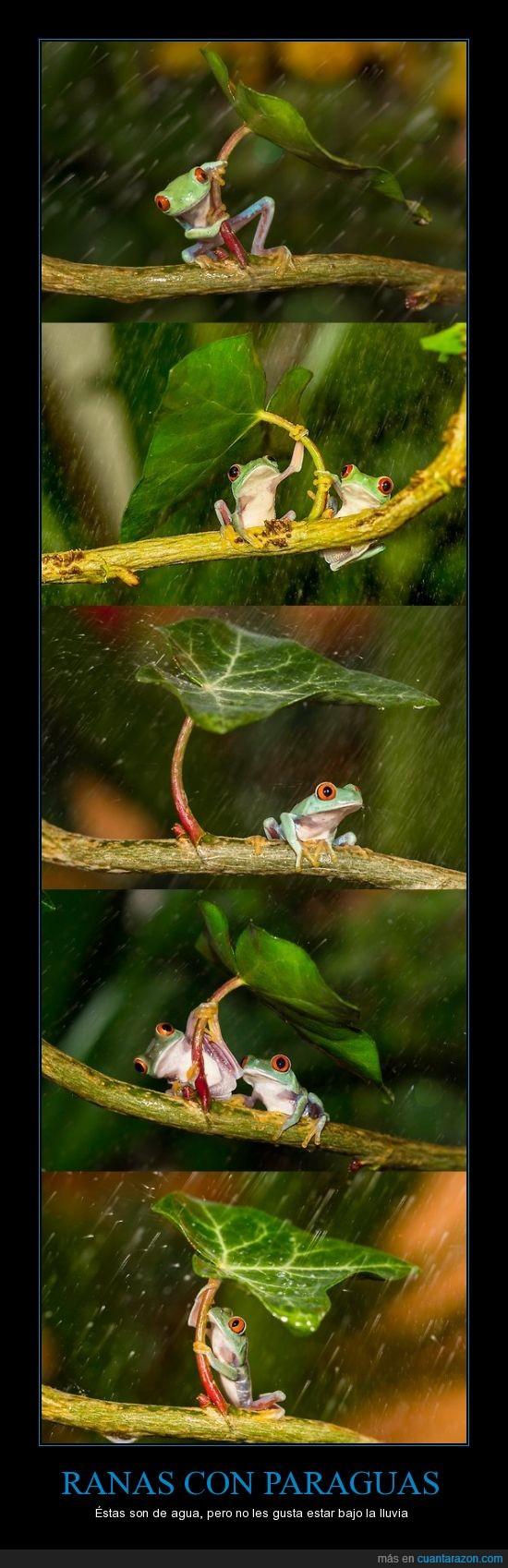 escampar,llover,lluvia,pagaguas,ranas,tapar