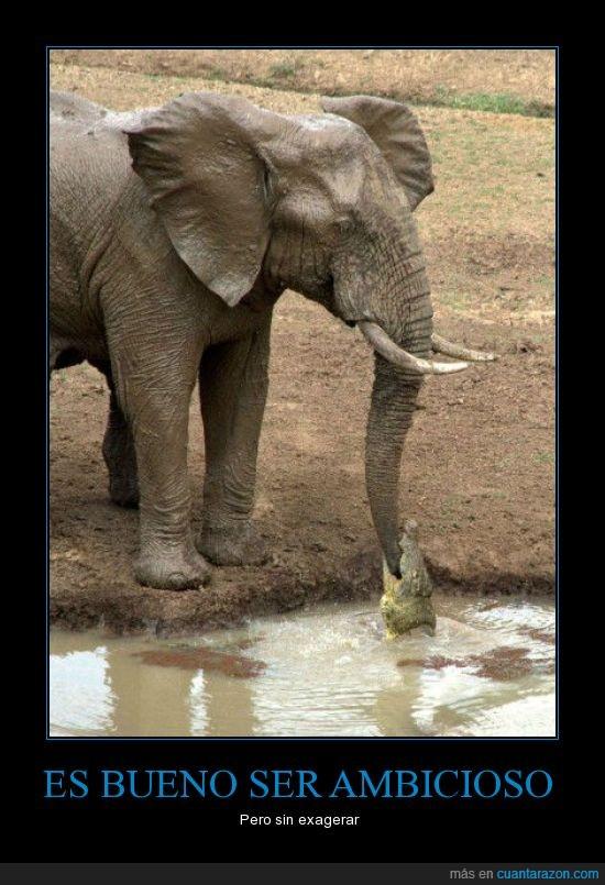ambicioso,cocodrilo,comer,elefante,fail,morder