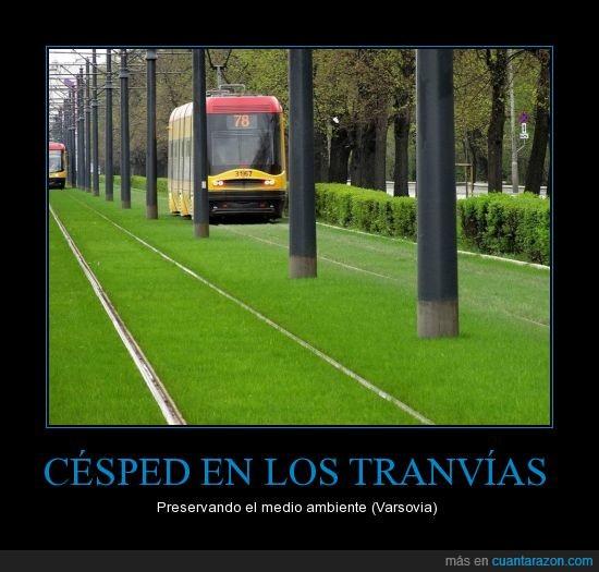Césped,ecología,grama,pasto,tranvía,tren