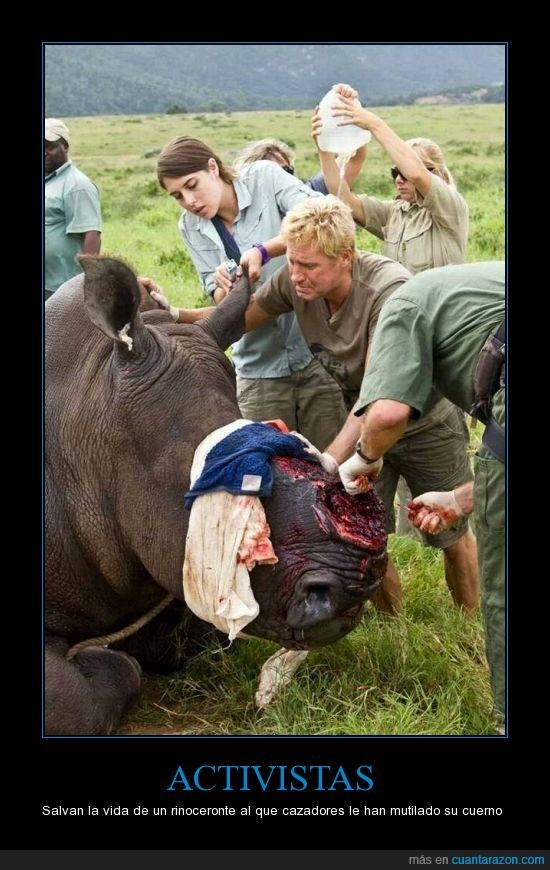 ayudar,comprar,cuerno,furtivo,mutilar,rinoceronte,salvar
