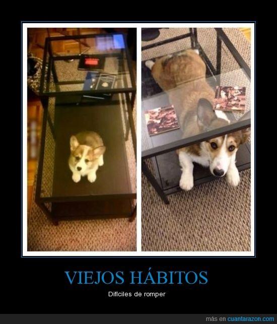 crecer,debajo,hábito,mesa,perro,viejos