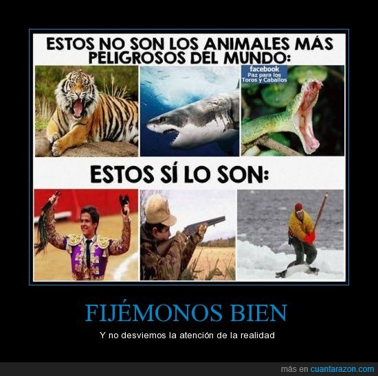 animales,caceria,caza,depredador,exterminio,hombre,humano,persona,torero