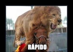 Enlace a Esa cebra lo tiene crudo contra el león