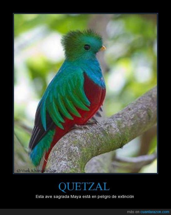 ave,Chiapas,Guatemala,mayas,quetzal,sagrada