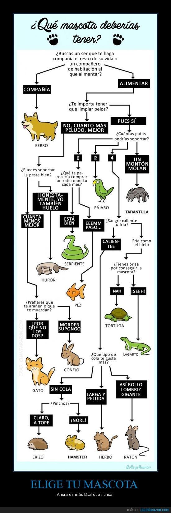 escoger,gato,hamster,herbo,mascota,pelo,perro,raton,serpiente