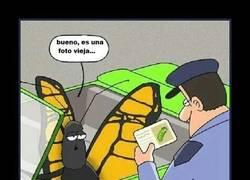 Enlace a La foto antigua de una mariposa