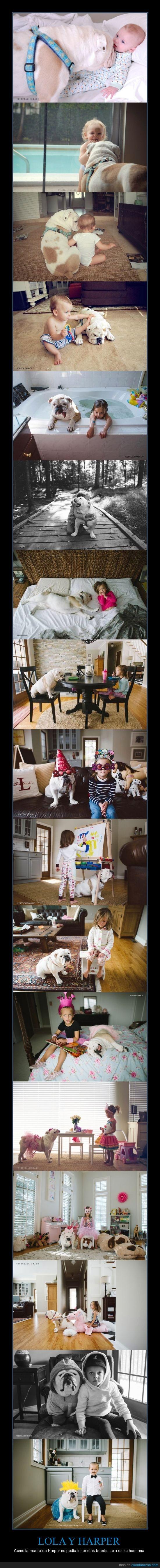 bebe,bulldog,crecer,harper,hermana,juntas,lola,perrro,rebeca leimbach