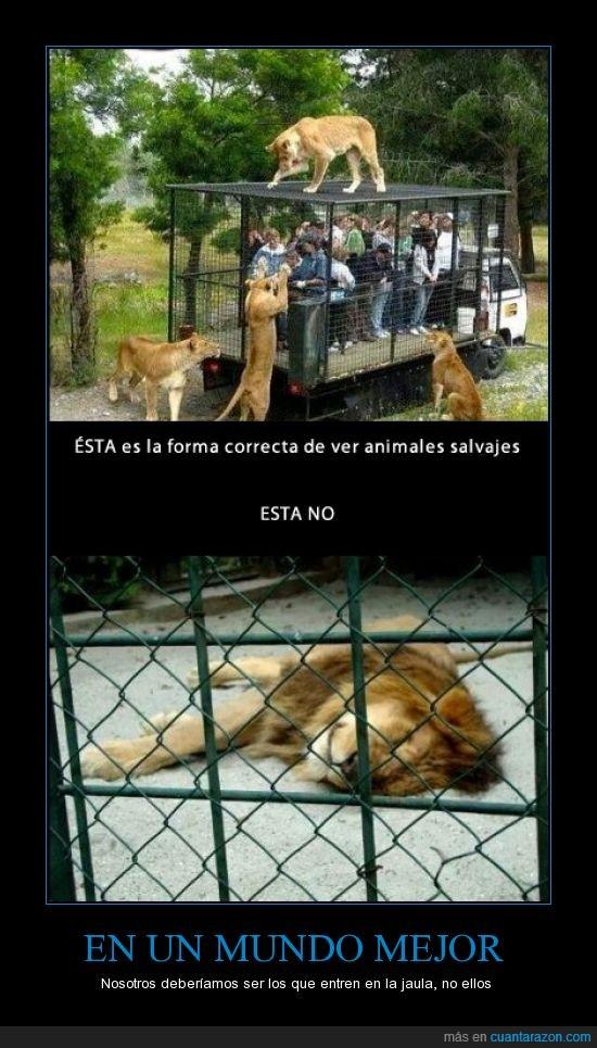 Cuánta Razón Di No A Los Zoológicos