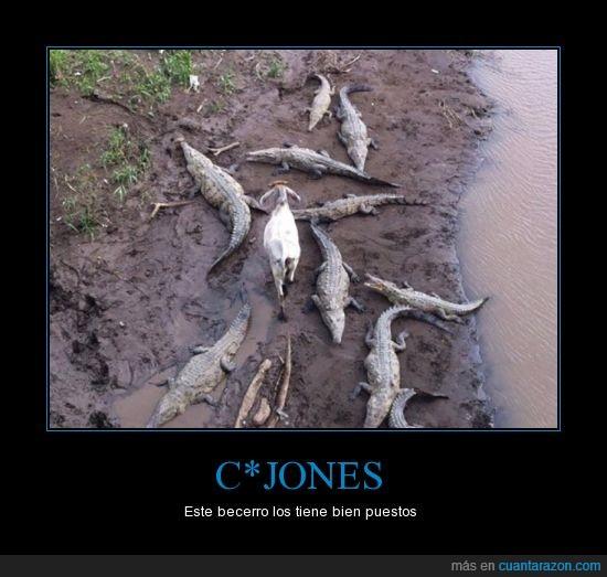 becerro,cabra,caiman,caminar,cocodrilo,medio,oveja,valiente