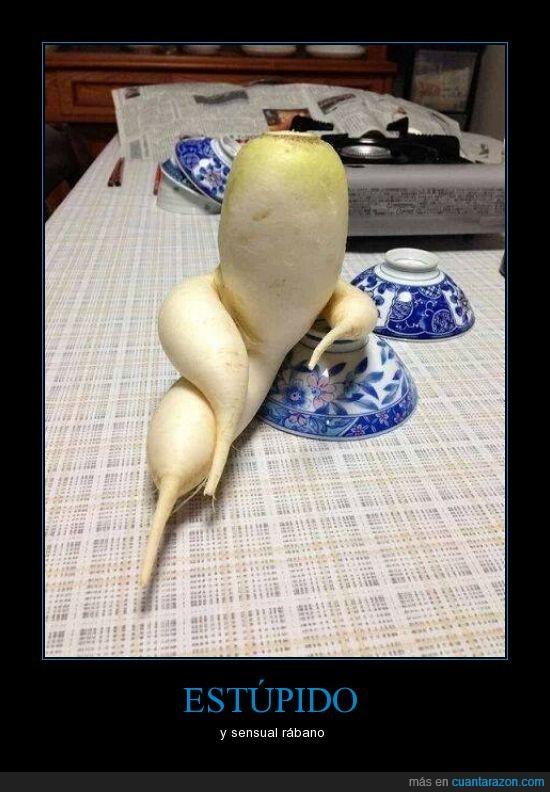 cocina,estúpido,rabano,sensual(,vegetal,verdura