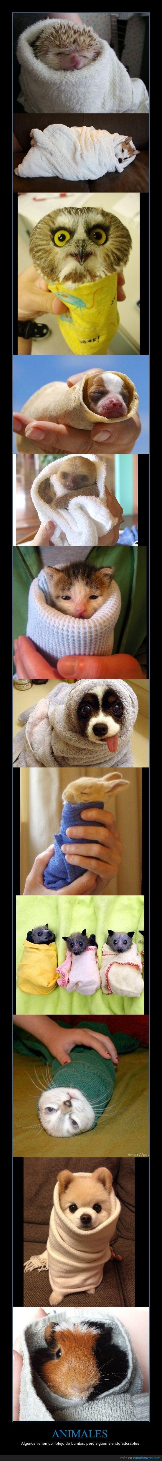 adorables,animales,burritos,enrollado,Soy un pastelito horneado de canela,toalla,trapo,wrapnimals