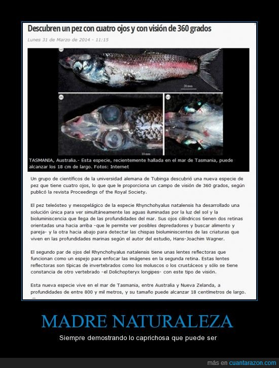 caprichos,cuatro ojos,naturaleza,pescado,pez,vida