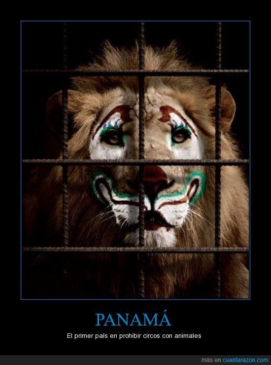 Centro América,circo,crueldad,leones,Panamá,payaso