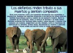 Enlace a Los elefantes entierran a sus muertos