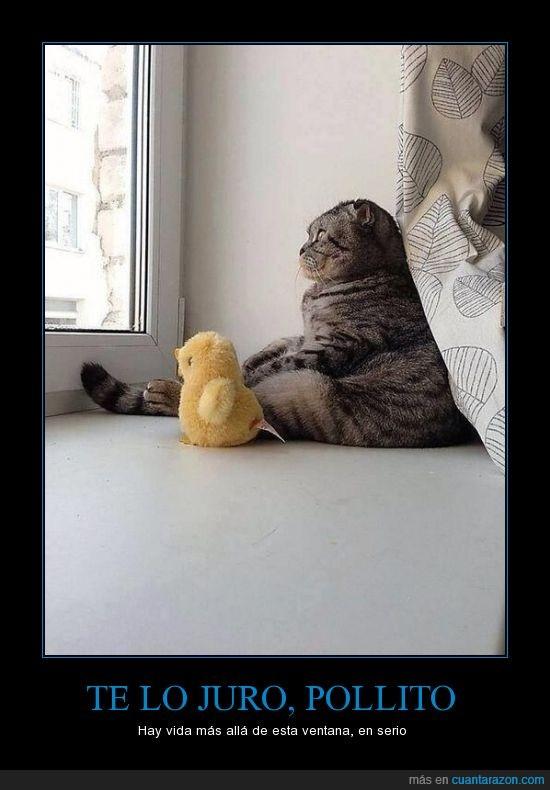 casa,félido,felino,gato,juegos,peluche,pollo,ventana