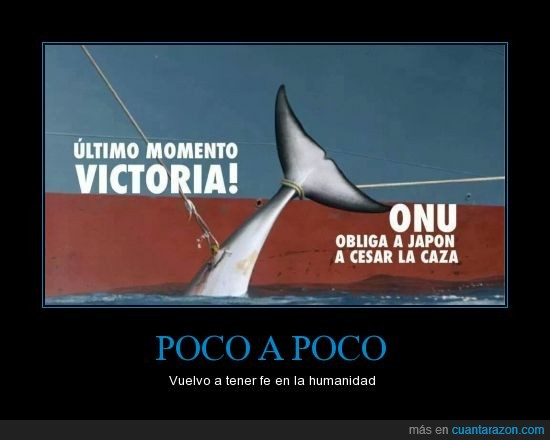 ballenas,caza,delfin,Japón,ley,onu,pesca