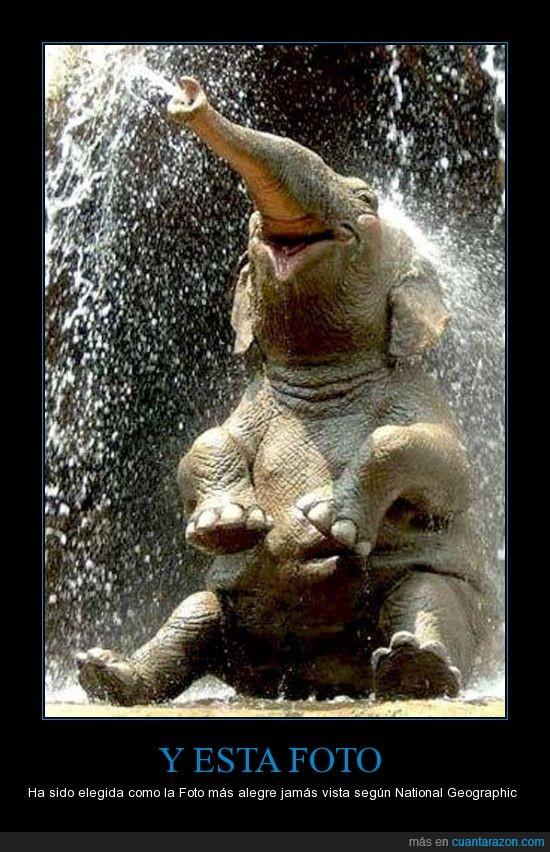 Agua,Elefante,Foto,Mas Alegre,natgeo,National geographic,Ternura