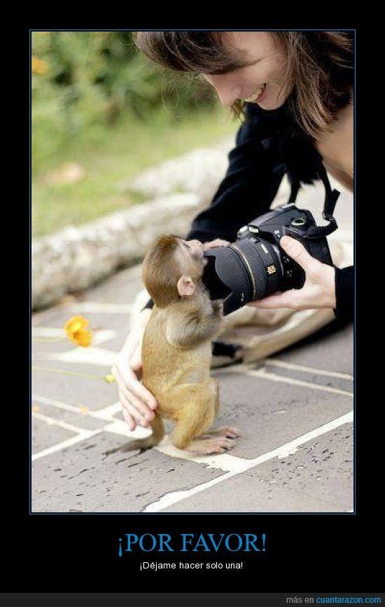 camara,cria,foto,fotografa,fotografo,hacer,mono,pequeño