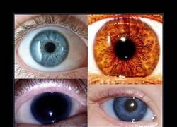 Enlace a Los colores de ojos más extraños
