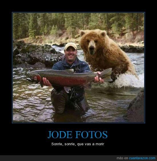 jode fotos,jodefotos,morir,oso,pescado,photobomb,rio,trucha